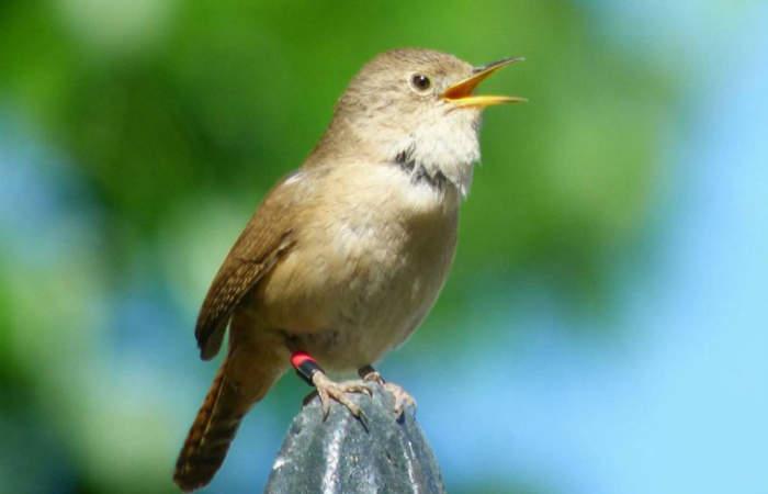 Gratis: el taller de avistamiento de aves que te hará adorar la naturaleza
