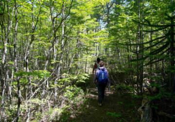 El increíble sendero escondido que tiene el Parque Nacional Villarrica