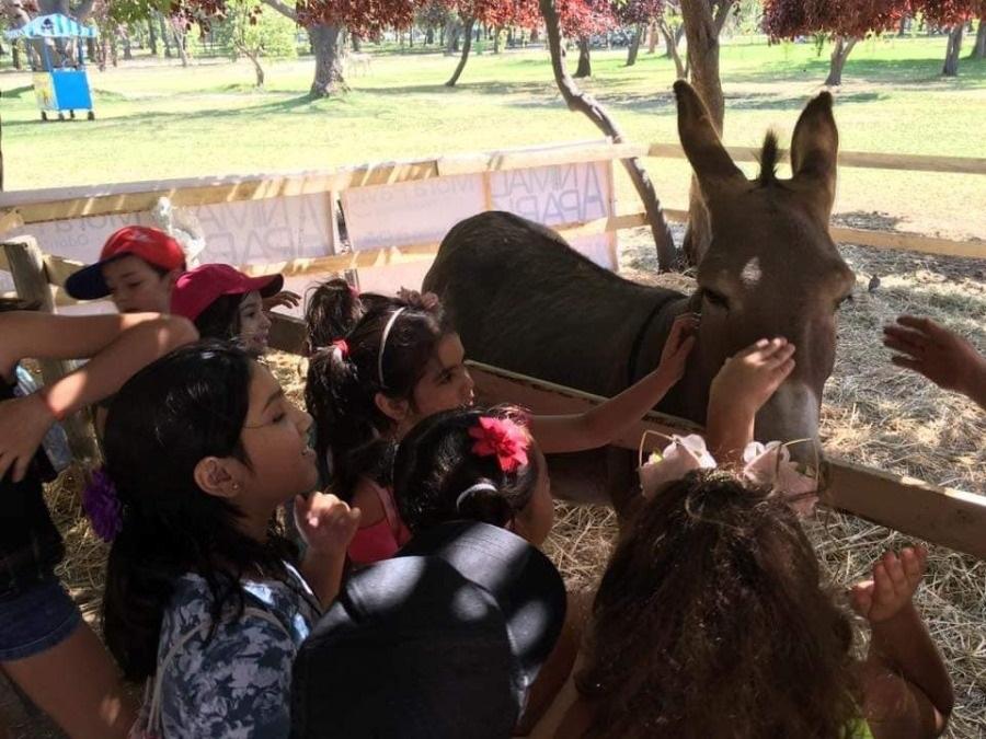 Animal Park 3: Una granja en medio del Parque Padre Hurtado