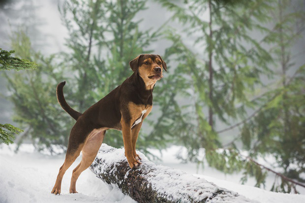 Mis Huellas a Casa: La encantadora historia con una canina protagonista
