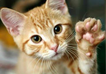 """6 opciones para celebrar el Mes de los Gatos y regalonear a tu """"cuchito"""""""