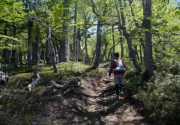 Qué no falte el trekking: Las clases de senderismo que te transportarán virtualmente a la montaña