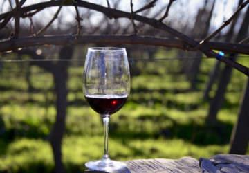 5 buenos vinos por menos de $ 4.500 recomendados por el sommelier Pascual Ibáñez