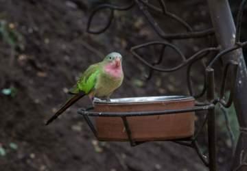 Un recorrido por el aviario del Parque Tricao, el más grande de América Latina