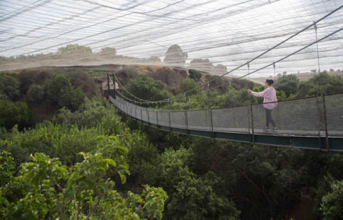 El hermoso Parque Tricao reabre sus senderos que llevan a un humedal, lago y aviario
