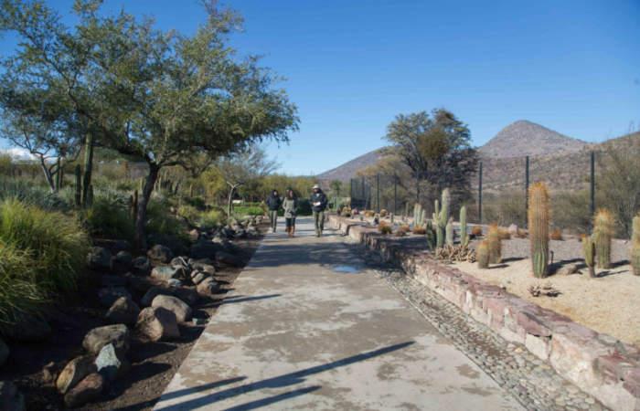 Quilapilún, el único parque gratuito de Santiago para conocer la flora nativa
