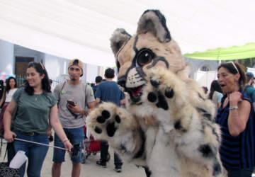 Día de la Fauna Chilena se festejará con juegos, talleres y charlas gratis en el Museo de Historia Natural