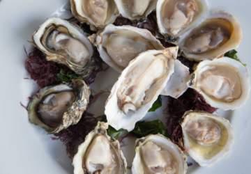Mar de Amores: El primer restaurante de mariscos vivos de Valparaíso