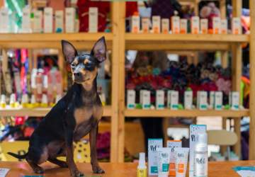 La Feria Pets tendrá de todo para regalonear a tu mascota