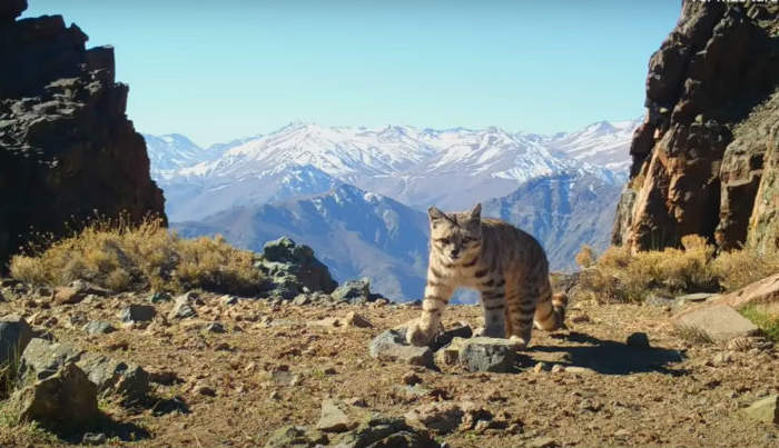 Gratis: Los imperdibles documentales sobre vida salvaje en Chile que podrás ver por streaming
