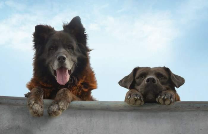 Los Reyes, el aplaudido documental que retrata a dos perritos callejeros, llega gratis a Ondamedia