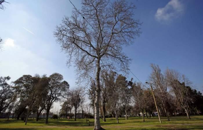El Parque O'Higgins reabre de lunes a viernes y con ingreso máximo por dos horas