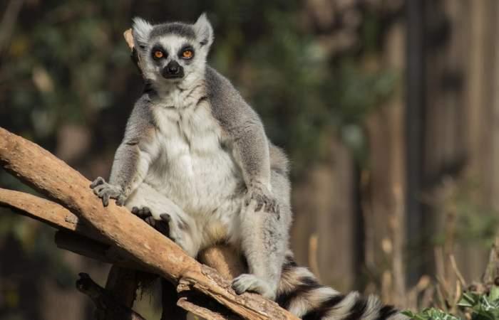 Buin Zoo reabre sus puertas justo a tiempo para las vacaciones de invierno