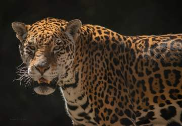 Buin Zoo está de vuelta con medidas sanitarias y una tierna novedad