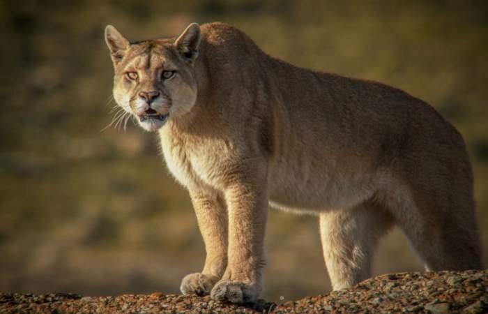 Santiago Wild, el festival de vida salvaje y medioambiente que podrás ver gratis en OndaMedia