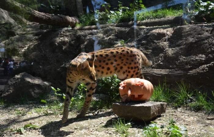 A la reapertura del Zoológico Nacional podrás ir en grupos de hasta cuatro personas