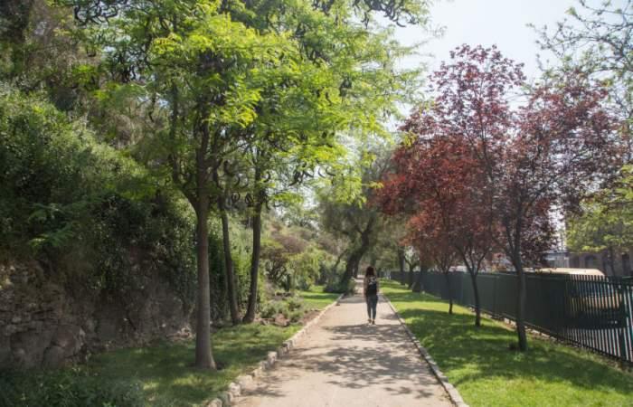Cerro Blanco, un relajado paseo ancestral para caminar entre árboles