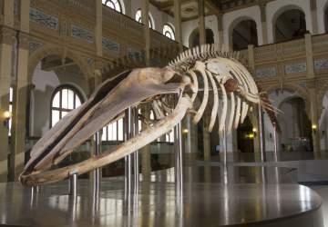 Los museos de Santiago comienzan a reabrir: parten el de Historia Natural y el Histórico Nacional