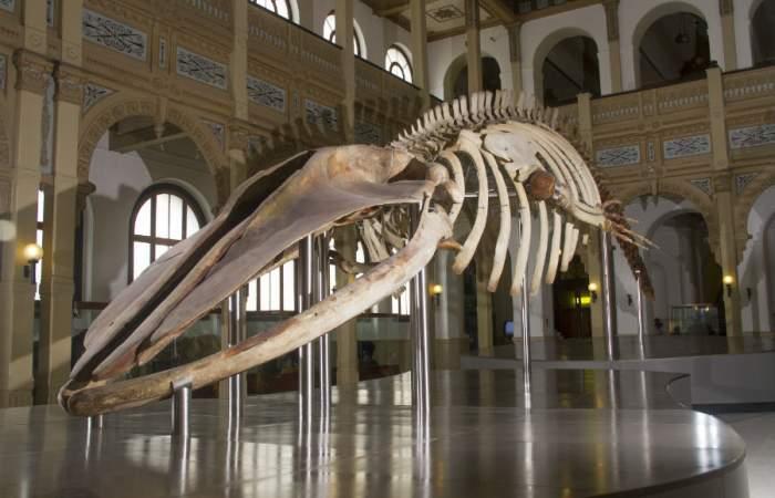 Guía con los museos abiertos para visitar con distancia física y mascarilla