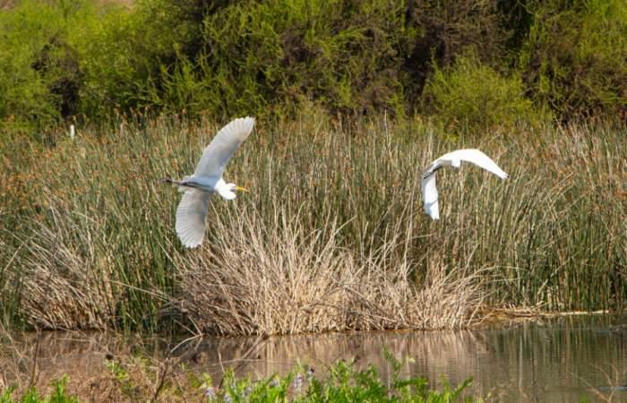 La Región Metropolitana tendrá un nuevo Santuario de la Naturaleza: la Laguna de Batuco