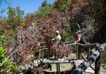 Qué hacer en Pirque, la escapada favorita de los santiaguinos