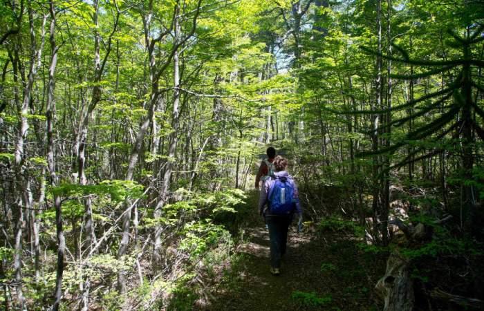 Hermosos e imperdibles: Los Parques Nacionales que reabrieron para el senderismo