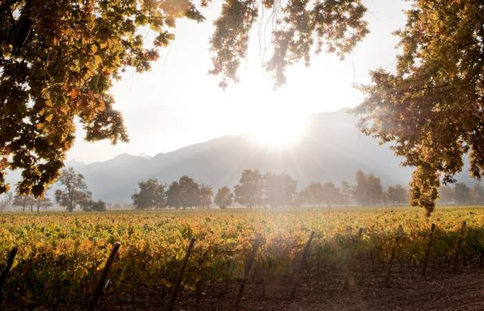 Celebra el Día del Vino paseando por una viña en pleno Santiago