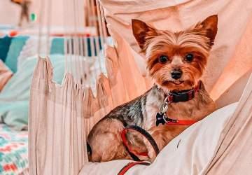 Mascotas bienvenidas: los lugares pet friendly para ir con tu perro