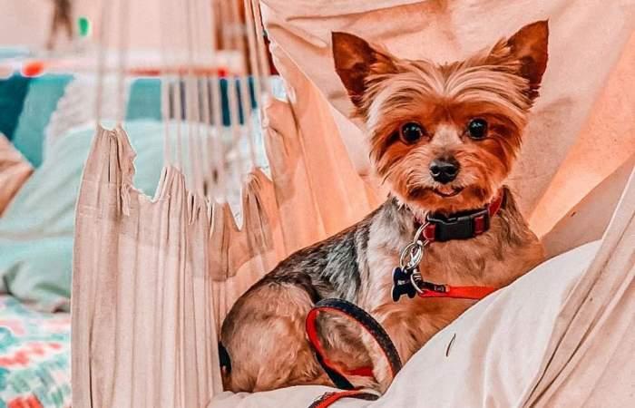 Mascotas bienvenidas: 12 lugares pet friendly para ir con tu perro