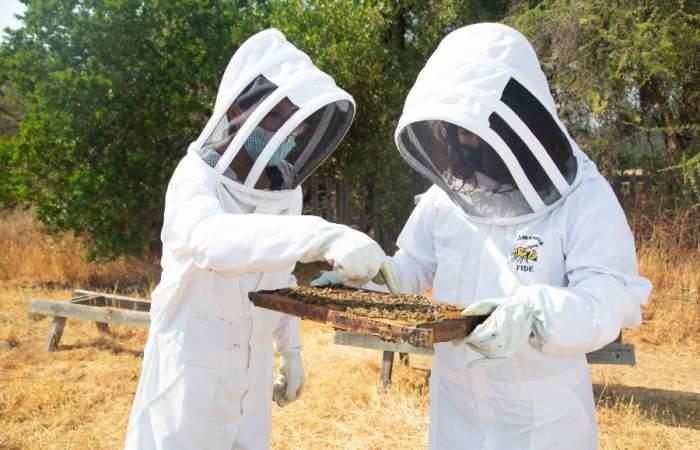 """Colmenares Fide, el entretenido """"apicultour"""" donde aprenderás todo sobre las abejas"""