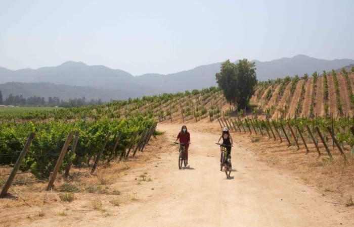 Las viñas abiertas cerca de Santiago que puedes visitar en época de vendimia