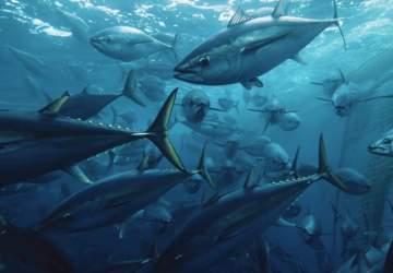 Seaspiracy: el polémico documental de Netflix que revela la cara más oscura de la pesca industrial