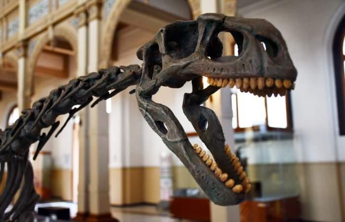 Con réplicas del chilesaurus reabre el Museo de Historia Natural