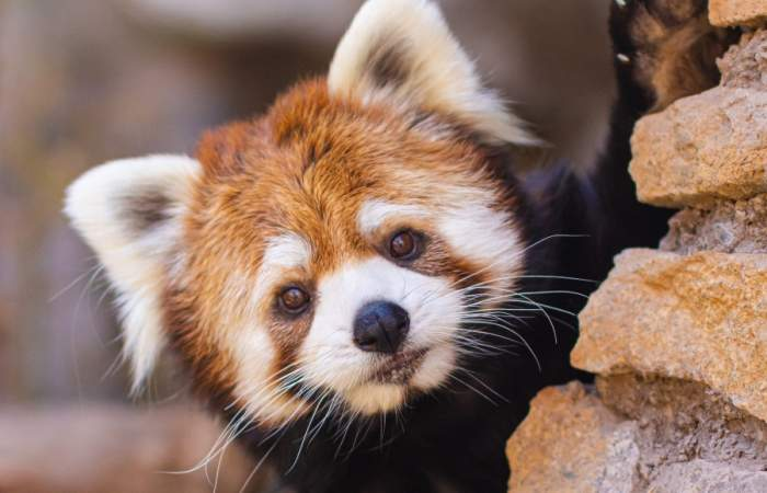 Apoya al Buin Zoo en la pandemia apadrinando a tu animal favorito