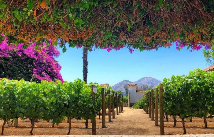 Eligen a 11 chilenas en el ranking de las 100 mejores viñas del mundo para visitar